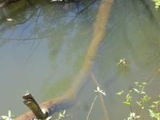 Житель Мордовии утонул в реке глубиной по колено