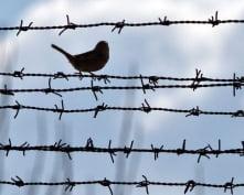 В Мордовии «простили» 1800 осужденных Дубравлага
