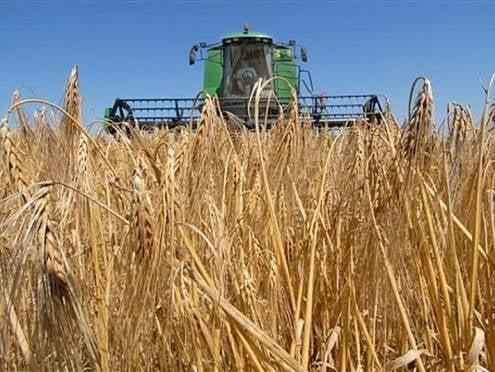 Аграрии Мордовии рассчитывают собрать выдающийся урожай зерна