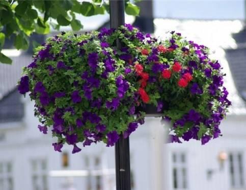 В Саранске станет больше цветов и деревьев