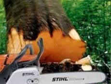 В Мордовии лесорубы ответят за смерть коллеги