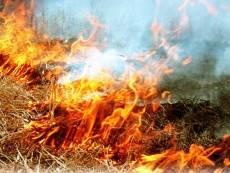 Десятки жителей Мордовии наказаны рублём за сжигание травы