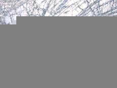 Водитель автобуса из Мордовии насмерть сбил жителя Пензы