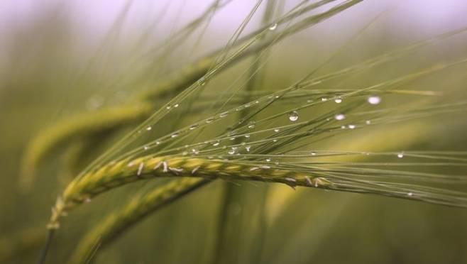 В Мордовии ввели режим ЧС из-за переувлажнения почвы