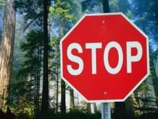 Леса Мордовии вновь закрыли для посещения