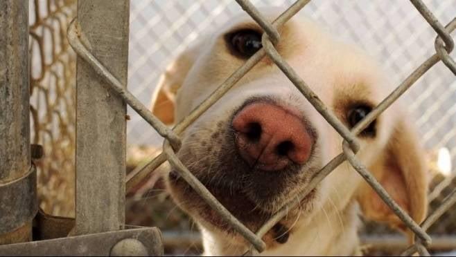 Приют для бездомных животных в Саранске откроют к июню