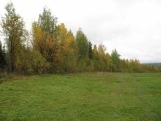 Житель Мордовии нашел в лесопосадках у дома труп
