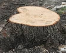 В Мордовии разыскивают криминальных лесорубов