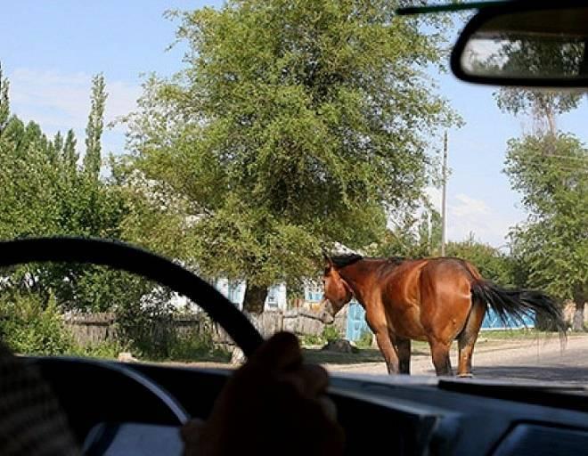 В Мордовии пассажирка кроссовера пострадала при встрече с лошадью