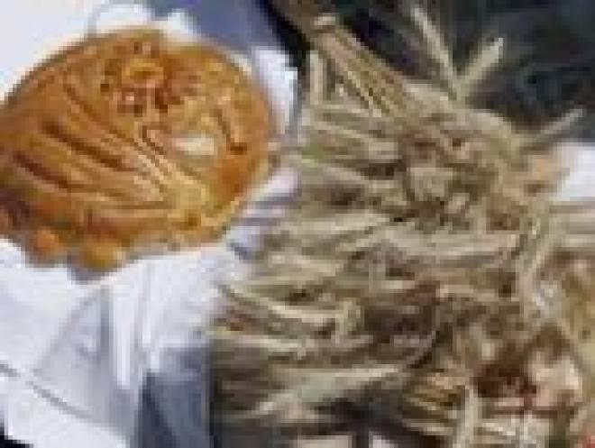 Аграрии Мордовии сегодня отмечают профессиональный праздник