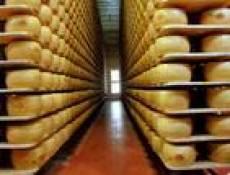 В Мордовии открывается крупнейший в России сыроваренный завод «Сармич»