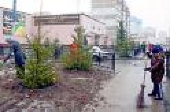 В Саранске будет посажено 2600 деревьев