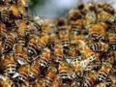В Рузаевке женщина погибла от укусов пчел