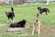 Глава одного из сельских поселений Мордовии наказан за бездомных собак