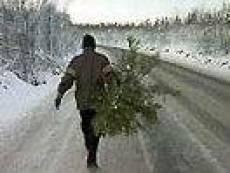 В Мордовии каждая ель - под контролем
