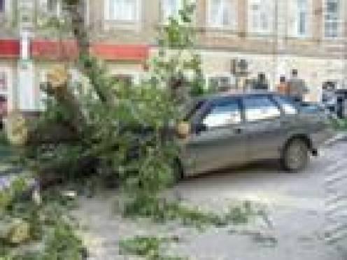 В Саранске коммунальщики заплатят автовладельцу за упавшее на машину дерево