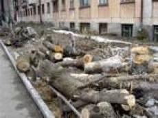 Для строительства автоцентра компания «Саранскмоторс+» вырубила почти 90 деревьев