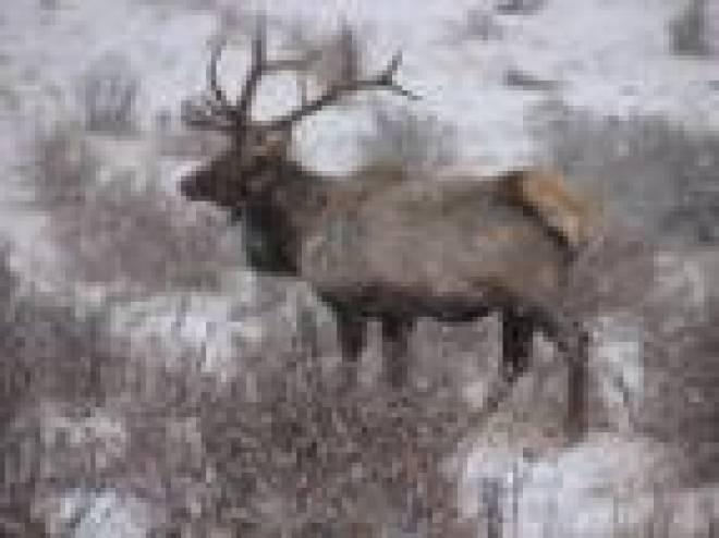 В охотничье хозяйство Зубово-Полянского района Мордовии завезли маралов с Алтая