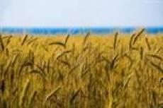 Аграрии Мордовии собрали более половины урожая зерновых