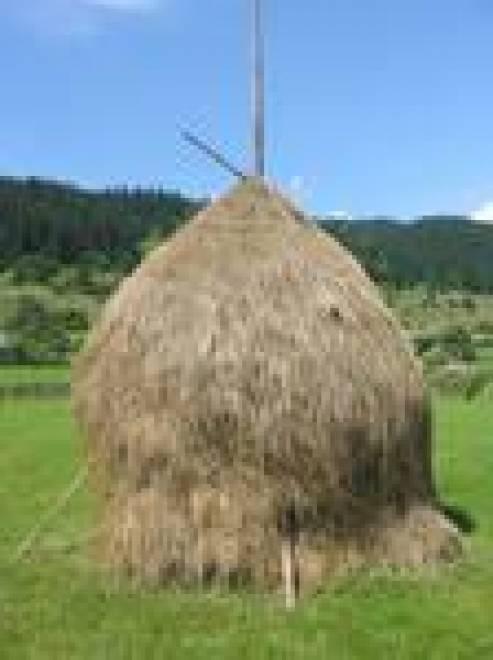 В Мордовии начинает гореть сено