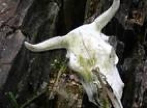 В Мордовии обнаружен потенциально опасный источник сибирской язвы