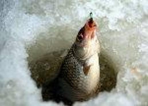 Рыбаки Мордовии выбирают бесплатную рыбалку