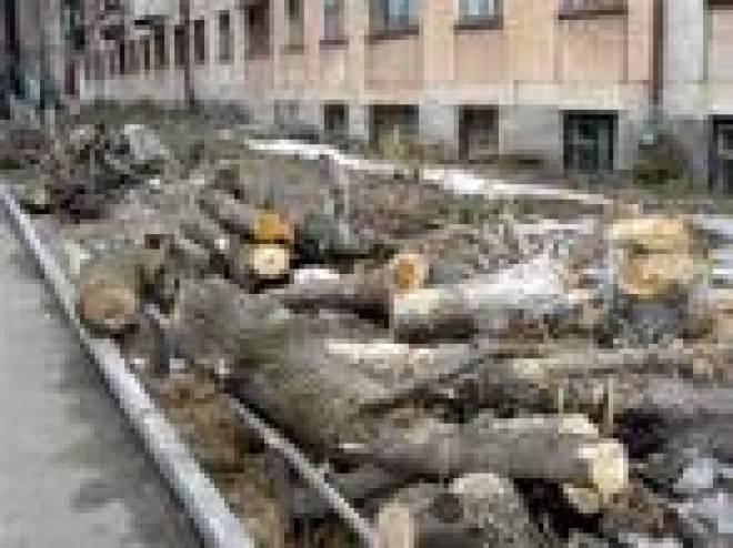 Власти Саранска сосчитают все деревья, срубленные за семь последних лет