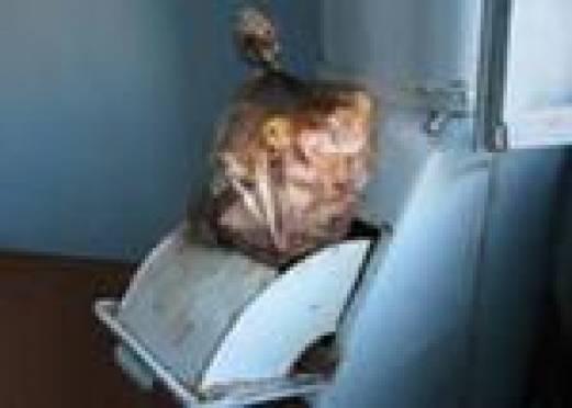 Мусоропроводы в многоэтажках Саранска закроют