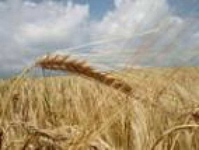 Несмотря на плачевное положение с урожаем зерновых, в Мордовии стоимость хлеба возрастет максимум на уровне инфляции
