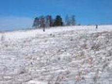 Аграрии Мордовии проверяют сохранность озимых после минувших морозов