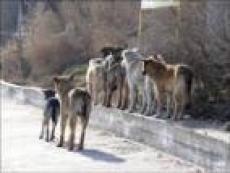 Увеличение числа бродячих животных в Саранске прогнозируют коммунальщики