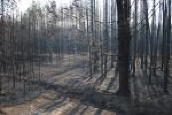 В Мордовии огнем уже уничтожено более 4 тысяч 300  гектар лесного массива