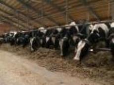 В аграрном секторе Мордовии наиболее востребованы механики, зоотехники и агрономы