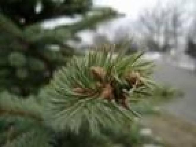 Установка главной новогодней елки в Саранске откладывается