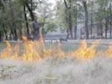 У пожарных Мордовии новая «головная боль» -  пух от осин и ив