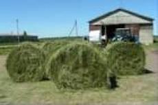 Сельхозпроизводители Мордовии испытывают нехватку кормов