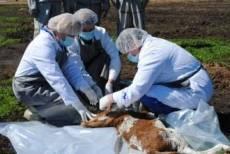 Спасатели Мордовии провели масштабные учения в одном из районов Мордовии