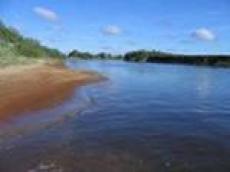 Прокуратура Мордовии выяснила, откуда в реке Мокша трупы животных