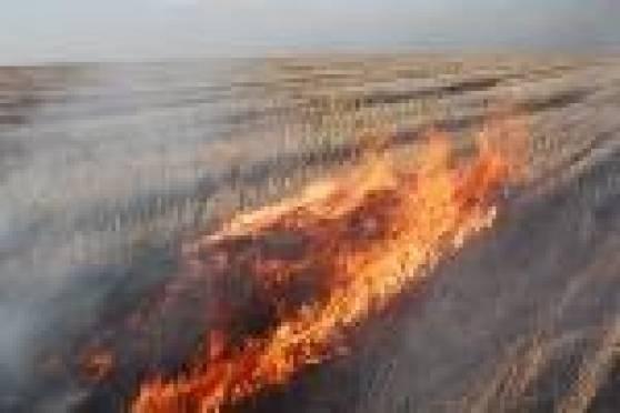 В Мордовии на корню сгорело 35 га ячменя