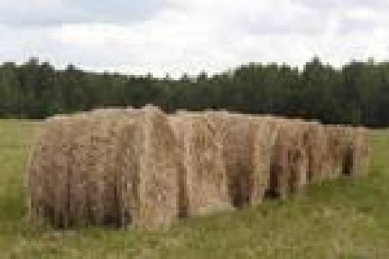Из-за сильной засухи план по заготовке кормов в Мордовии не выполняется