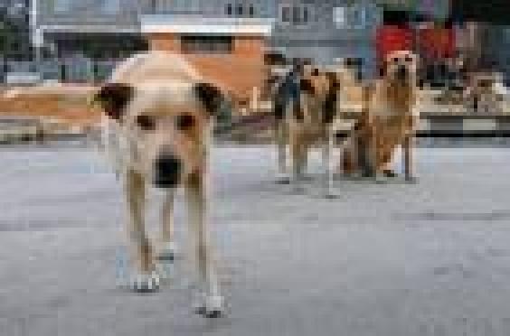 В Саранске на 3 тысячи бродячих собак стало меньше