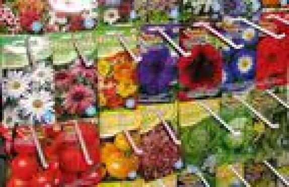 Предприниматели Саранска продают семена сомнительного происхождения