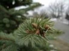 В селах Октябрьского района Саранска началась установка новогодних елок